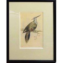 EDWARD LEAR 'Sudies of birds species'