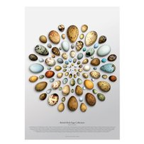 TONY LADD 'British birds eggs - circular'